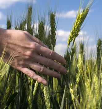 Hand streicht durchs Gras
